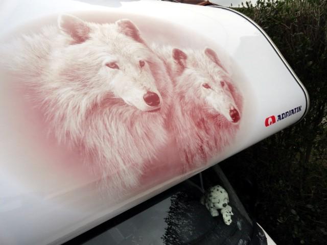sticker capucine camping car